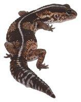 Hvordan ta vare på Land salamandere