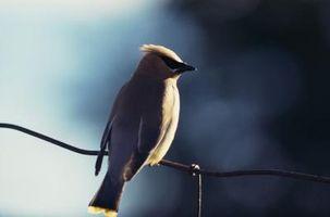 Hvordan velge den beste områder for fugletitting og småblødninger